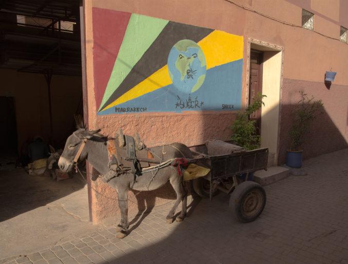 Marrakech Donkey